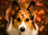 狗狗常见皮肤病有哪些