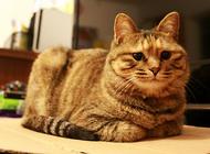 帮猫咪节食可以让你们更亲密?