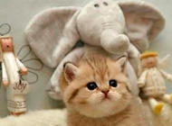 猫咪驱虫要定时定量吗?