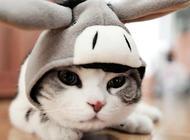 松木猫砂的使用建议