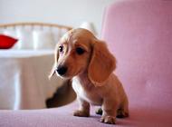 如何从便便判断狗狗健康情况
