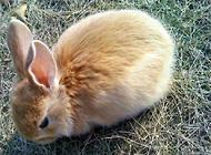饲养公主兔的误区