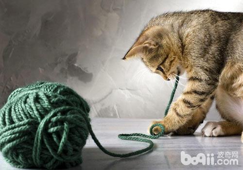绝对不能碰!以下猫咪的饮食禁忌你知道吗?