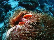 如何预防热带鱼生病?