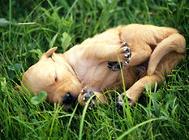 几种夏天狗狗易发皮肤病治疗方案
