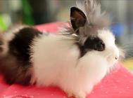 夏天宠物兔要怎么养?