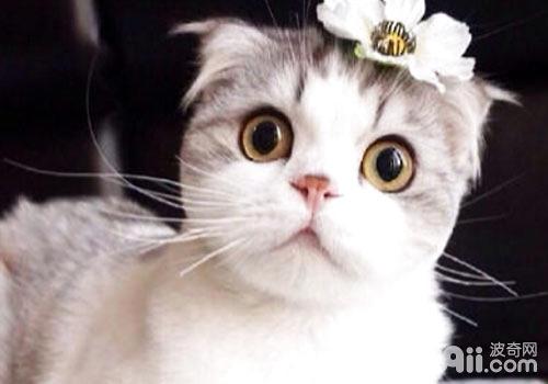 家中养猫的注意事项你都知道吗?
