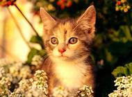 猫咪向你眨眼睛是在撩你吗?