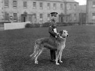 世界上最高的犬——爱尔兰猎犬