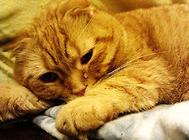 猫咪总是流眼泪?