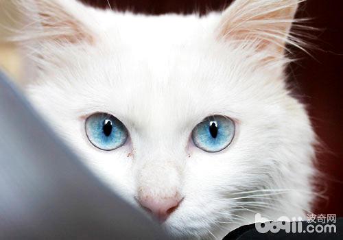 貓咪向你眨眼睛是在撩你嗎?