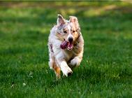 为什么狗狗夏季更容易得皮肤病?
