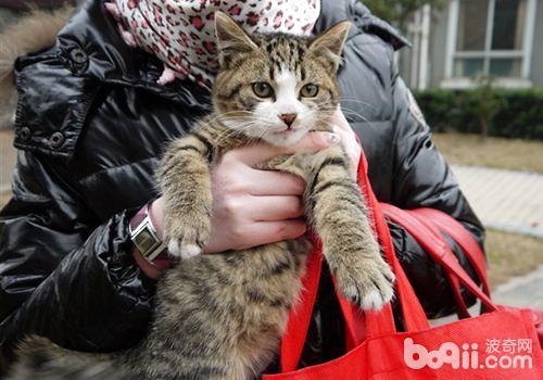 史小姐救助的流浪猫