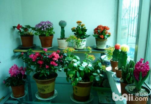 家庭养花品种如何搭配
