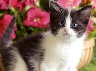 做好以下几点,可不要让猫咪铅中毒哦!