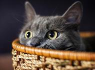 猫咪吃东西只用半边牙齿?