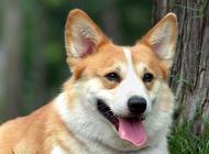 狗狗流口水的常见原因