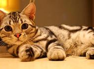 幼猫什么时候会断奶?