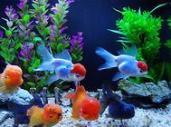 影响观赏鱼吸收维生素的原因