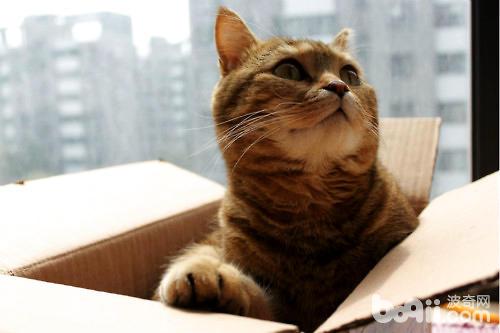 猫咪喜欢箱子