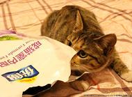 猫咪偷吃东西怎么办