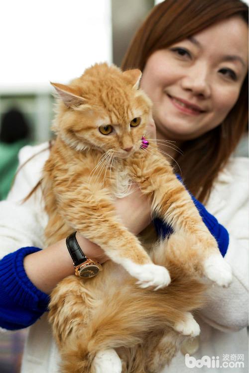史小姐和救助的流浪猫