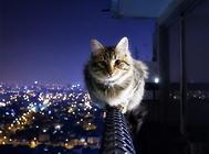 猫咪放养的危害