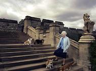 英国女王的柯基