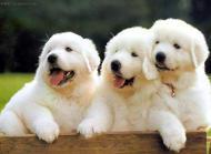 养狗的四大误区