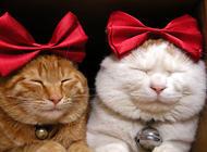 猫脸识别的喂食器你见过吗?