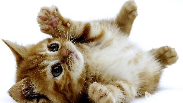 1.最简单的方法就是用齿密的梳子为猫咪梳理毛发,跳蚤会卡在梳子上,然后将这些跳蚤粘附在胶带上,放到有洗涤剂中将其杀死。主人切忌,捉住的跳蚤不要用手去碾死它,简单的碾死跳蚤后它体内的条虫卵就会飞出来,还是有可能是宠物猫咪受到跳蚤的感染。   2.为猫咪洗澡,保持猫咪身体的清洁,也是杜绝跳蚤的有效方法。在洗澡的同时可以采用杀跳蚤的洗发剂和护理液,从猫咪的头部开始,一点一点的向尾部进行清洗,彻底清除毛发内的跳蚤。   3.