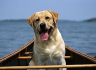 狗呕吐是怎么回事?狗狗呕吐怎么办?