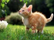 买猫注意事项