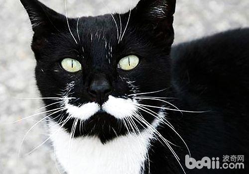 猫咪的胡须你知道多少