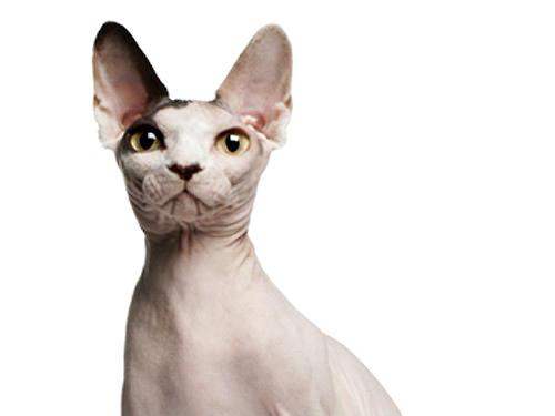 可爱的骨头猫咪图片