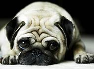 养狗不仅仅易于健康,以下的养狗好处你都知道吗?