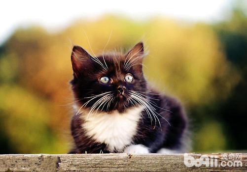 猫咪到6个月龄大后,身体各项功能发育完全