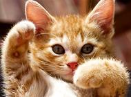 猫咪发情用避孕药?