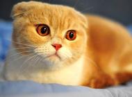猫咪的怪癖:喝脏水?