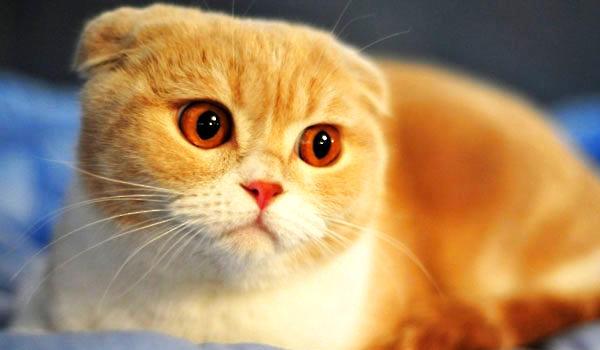 猫咪的怪癖 喝脏水