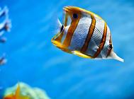 为什么观赏鱼用药不奏效?