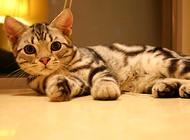 十二生肖中为什么没有猫