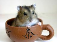 仓鼠为什么会吃同类