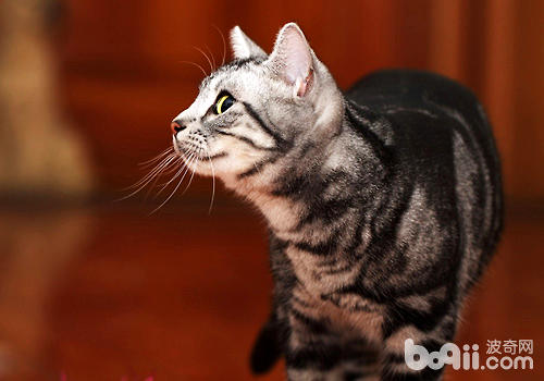 猫与人的可爱的图片
