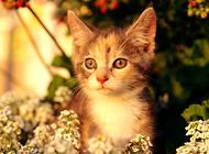 猫咪喜欢玩毛茸茸的球?