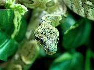 新手应该如何挑选一条健康的宠物蛇?