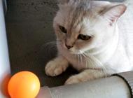 猫咪们喜欢什么颜色?