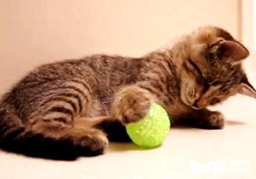 小猫玩球图片_猫咪喜欢玩毛茸茸的球? – 喵星球