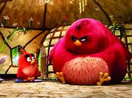 宠物鸟肥胖的症状