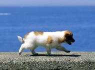 宠物狗领养时要注意什么